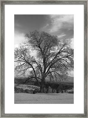 Grand Canyon Life Tree Framed Print
