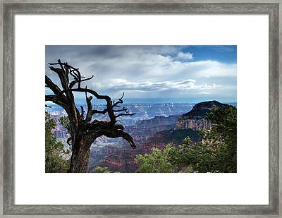 Grand Canyon North Rim After A Storm Framed Print by C Thomas Willard