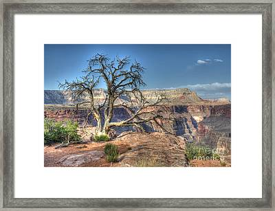 Grand Canyon Tree At Toroweap Framed Print by Bob Christopher