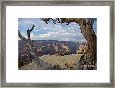 Grand Canyon Tree Framed Print