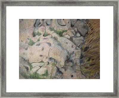 Grand Dad's Roots Framed Print by Diane montana Jansson