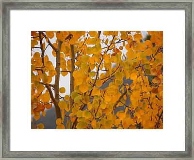 Grand Lake Aspen Framed Print