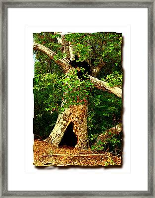 Grand Old Sycamore Tree Ahmanson Ranch Calabasas Framed Print by Noah Brooks