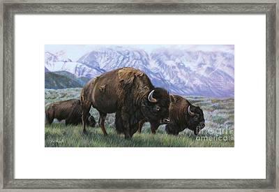 Grand Teton Bison Framed Print by Deb LaFogg-Docherty