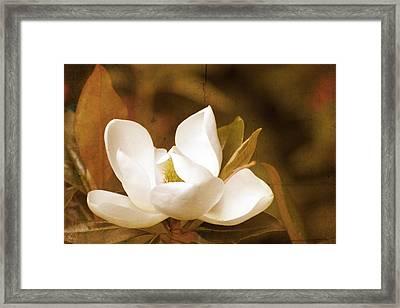 Grandiflora Framed Print by Margaret Hormann Bfa
