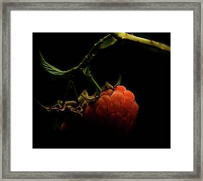 Grandmas Berries Framed Print by Empty Wall