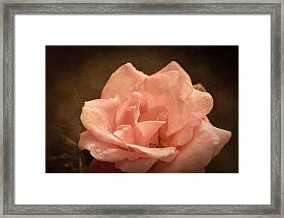 Grandmas Bloom Framed Print by Terrie Taylor