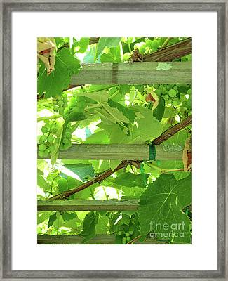 Grape Arbor Framed Print by Methune Hively