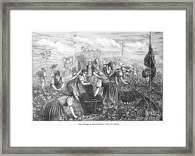 Grape Harvest, 1874 Framed Print by Granger