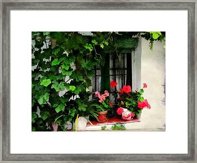 Grape Vines An Geraniums Frame A Window Framed Print by Elaine Plesser
