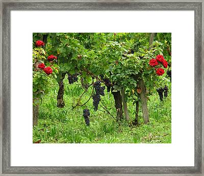 Grape Vines And Roses I Framed Print by Greg Matchick