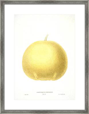 Grapefruit Framed Print by Granger