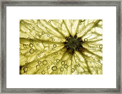 Grapefruit Slice Framed Print by Linda Wright