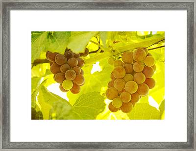 Grapes A Fine Art Photography Print And Canvas Art Framed Print by James BO  Insogna