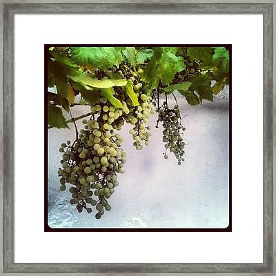 #grapes, #green, #wall, #white Framed Print
