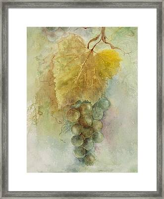 Grapes IIi Framed Print by Judy Dodds