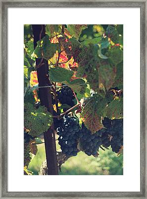 Grapes Framed Print by Laurie Search