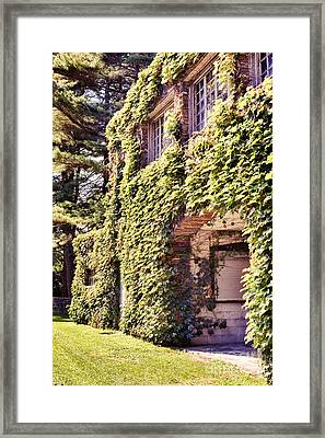 Grapevine Covered Building Framed Print by HD Connelly