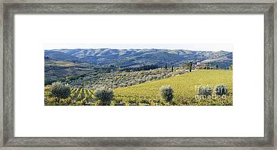 Grapevines And Olive Trees Framed Print by Jeremy Woodhouse