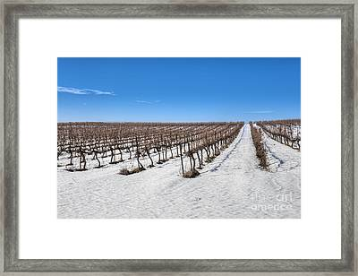 Grapevines In Snow Framed Print by Noam Armonn