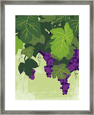 Graphic Illustration Of Wine Grapes On The Vine Framed Print