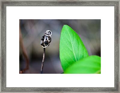 Grasping Framed Print by Jason Heckman