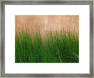 Framed Print featuring the photograph Grass And Stucco by David Pantuso