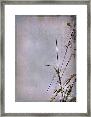 Grass And Wall Framed Print by Judi Bagwell