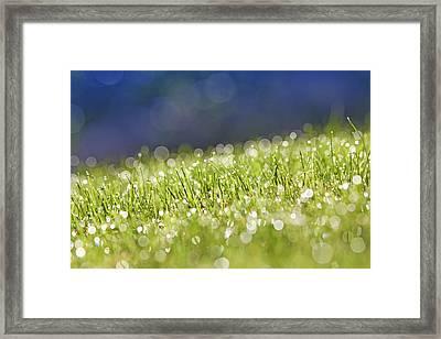 Grass, Close-up Framed Print by Tony Cordoza