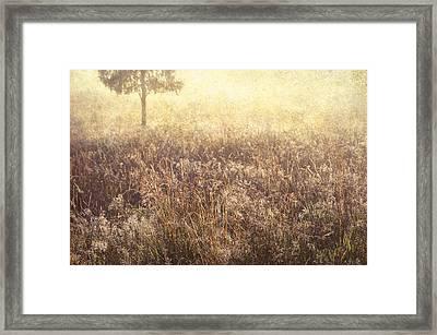 Grass Diamonds Framed Print by Jenny Rainbow