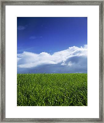 Grass In A Field, Ireland Framed Print by The Irish Image Collection