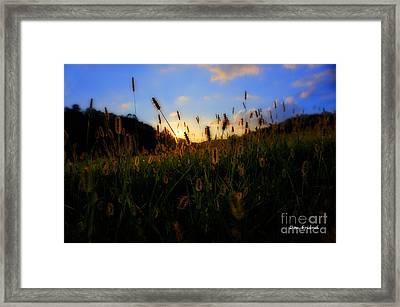 Grass In Field At Sunset Framed Print by Dan Friend