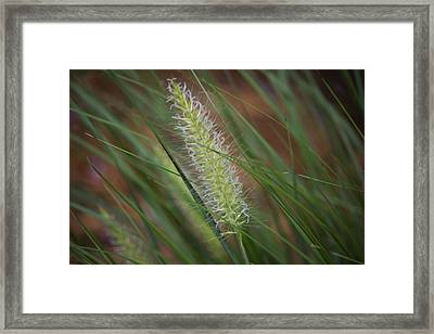 Grass In The Wind Framed Print