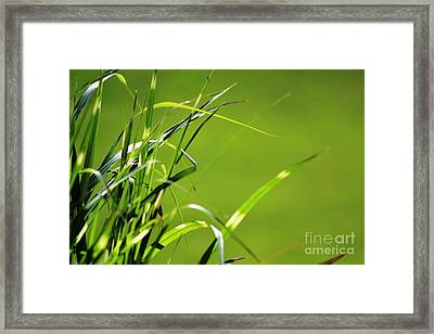 Grass Is Always Greener Framed Print