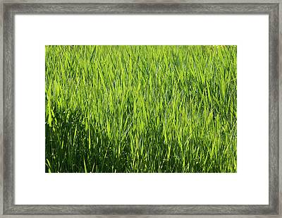 Framed Print featuring the photograph Grass by Jerry Cahill