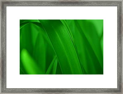 Grass Framed Print by Naomi Berhane
