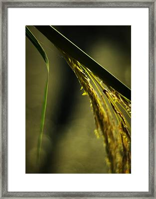 Grass Plume Framed Print