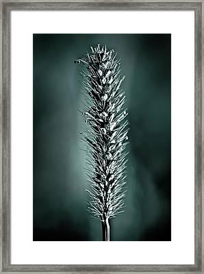 Grass Seedhead In Deep Cyan Framed Print