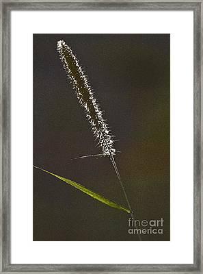 Grass Spikelet Framed Print by Heiko Koehrer-Wagner