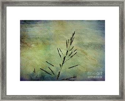 Grass Stem Framed Print by Judi Bagwell