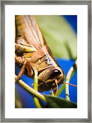 Grasshopper Framed Print by Christy Patino