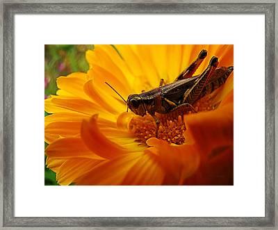 Grasshopper Luncheon Framed Print
