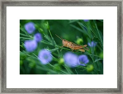 Grasshopper Framed Print by Mike Grandmailson