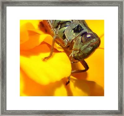 Grasshopper On Yellow Framed Print by Maureen  McDonald