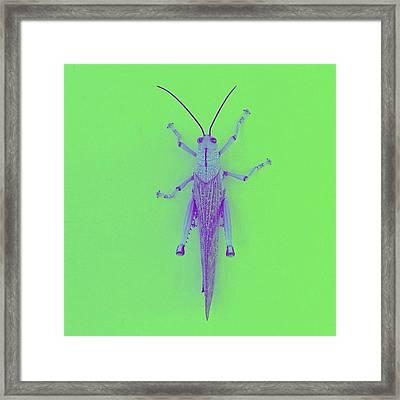 Grasshopper Pop (green) Framed Print