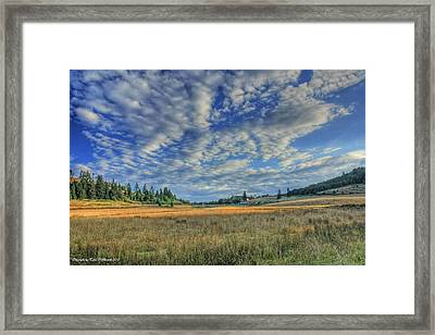 Framed Print featuring the photograph Grassy Field by Tyra  OBryant