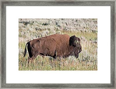 Grassy Horn Framed Print