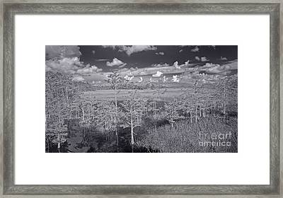 Framed Print featuring the photograph Grassy Waters 3 Bw by Larry Nieland