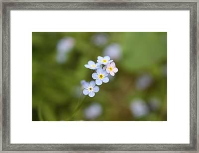 Grateful Framed Print by C E Dyer