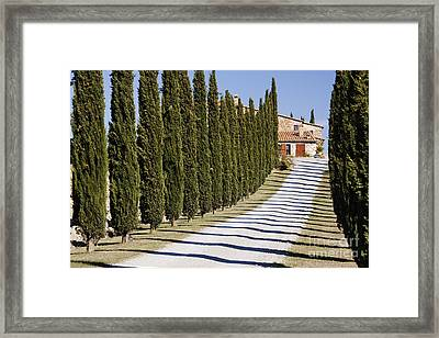 Gravel Road Lined With Cypress Trees Framed Print